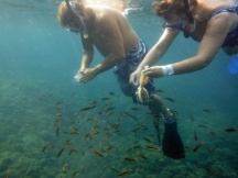 Snorkeling and feeding fish at San Augustine
